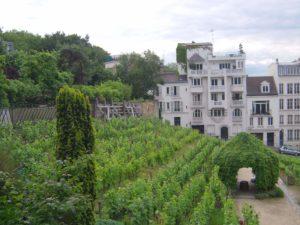 Les vignes de Montmartre Paris Clos Montmartre Visite par Passages secrets