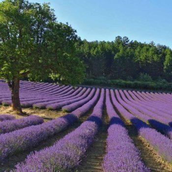 France Voyage en Provence chateauneud du pape - Passage Secret