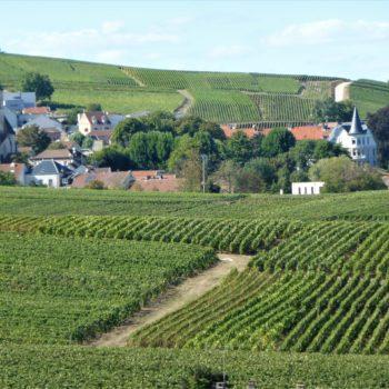 Région Champagne, vignes, domaines et dégustations avec l'agence Passages Secrets