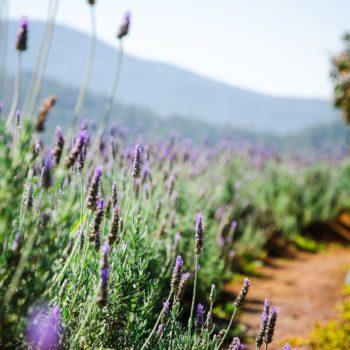 Découvrir la Provence avec l'agence Passages Secrets